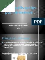 hiposalivacion