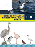 MANUAL DE AVES  DOC.pdf