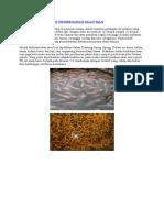Cara Budidaya Dan Pembesaran Ikan Mas