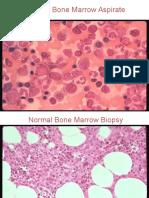 Gambar Sel Darah Normal