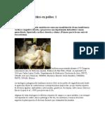 El Síndrome Ascítico en Pollos- EL SITIO AVICOLA