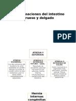 Intestino Grueso y Delgado
