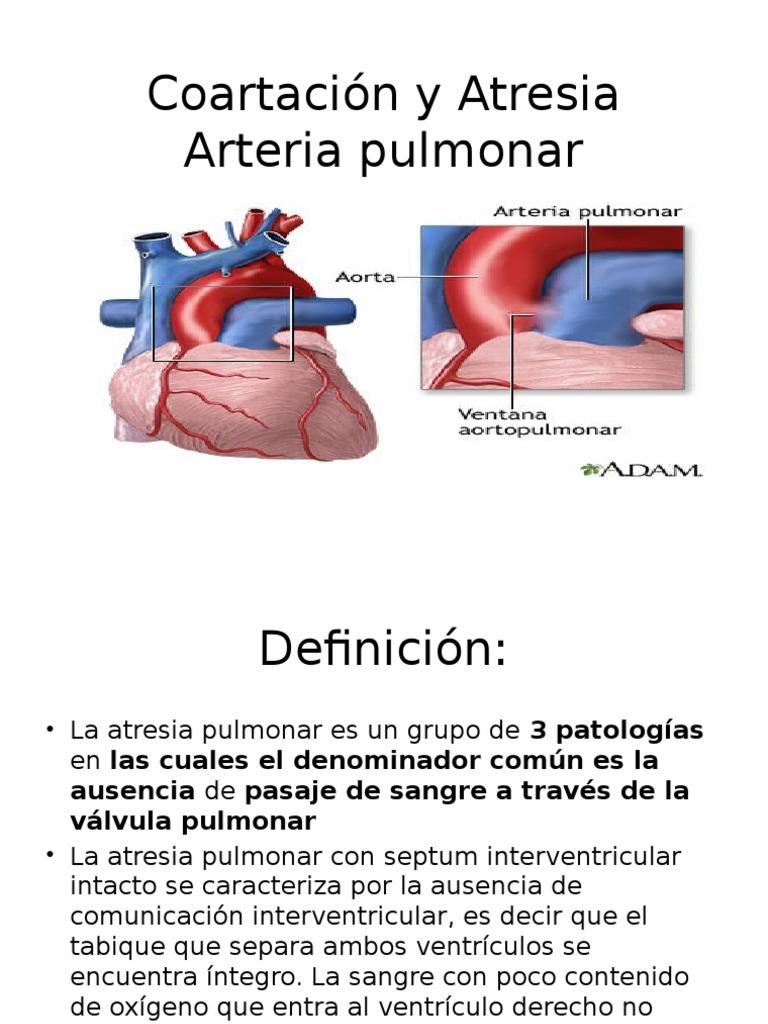 Único Adam Anatomía Interactivo Festooning - Anatomía de Las ...