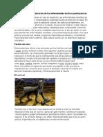 Clasificación y Sistematización de Las e