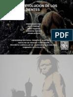 EVOLUCION Dientes en mamiferos