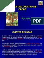 Plagas en Cacao