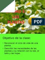 LAS PLANTAS.ppt