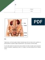 Anatomia Rim