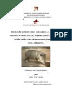 pma1de1.pdf