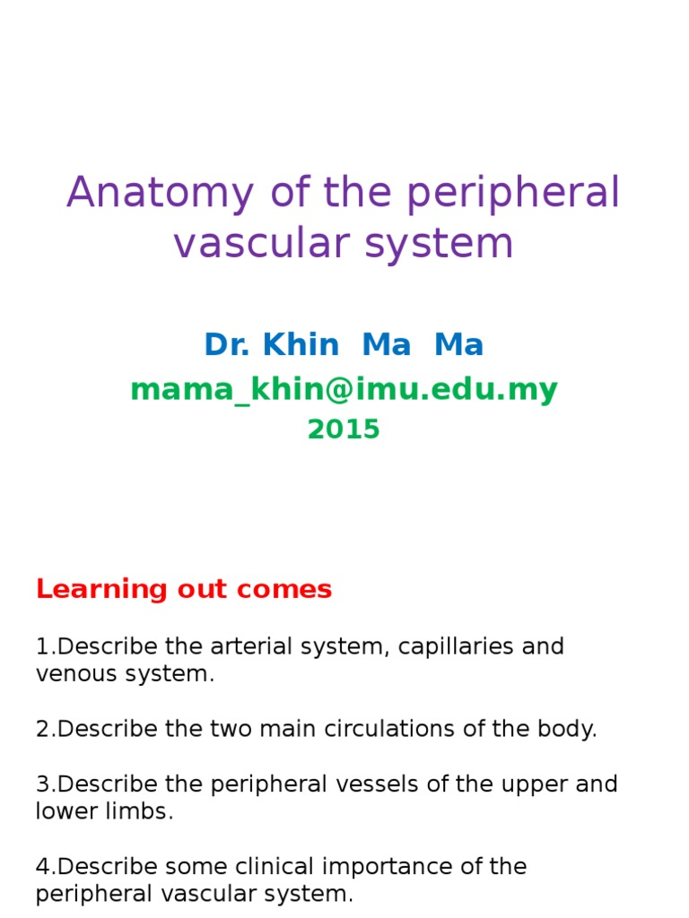 Anatomy of the Peripheral Vascular System -2 | Vein | Artery