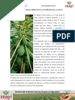 01. Nutricion de papaya.pdf