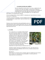La Agricultura en Cañete Mktg 1
