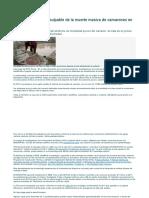 Desenmascarado el culpable de la muerte masiva de camarones en Asia.docx