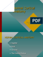 Normal Cortical Anatomy