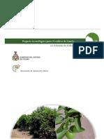 LIMON.pdf