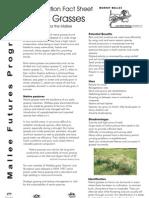Native Grasses - Revegetatin Fact Sheet