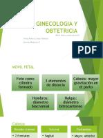 Ginecologia Exposicion