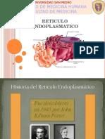 Retículo-Endoplasmático