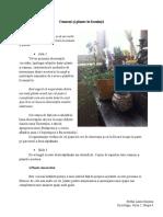 Antropologie - oameni si plante - Stefan Laura - Sociologie, Seria 2, Grupa 4.docx