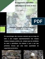 Comunicacao_Oficina_Producao_Caseira.pdf