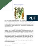 jagung 2016.pdf