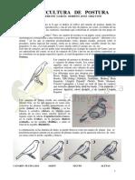 CANARICULTURA  DE _POSTURA 5pags.pdf