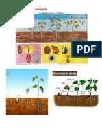 La Germinación de Una Planta