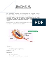 ORGANOIDES CELULARES