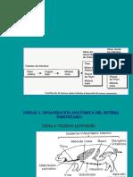 Organización anatomica del sistema inmune, tema5- 2004.