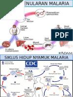 Siklus Penularan Malaria
