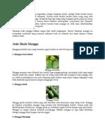 Buah Mangga Diindia Sering Digunakan Sebagai Makanan Pokok