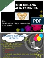 Anatomi Organa Genitalia Feminina