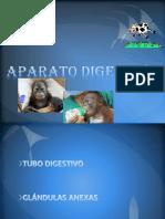 Digestivo_1- (1)