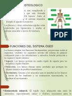 Sistema Osteologico
