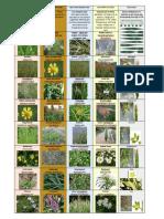 Indicator Plants