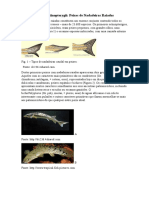 Classe Actinopterygii.docx