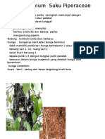 Ciri – Ciri Umum Suku Piperaceae