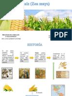Expo Cereales Maiz( Zea Mays)