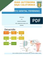 genitalfemenino-140409225300-phpapp02.pptx
