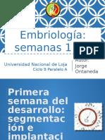 Segmentación e implantación del embrión.pptx