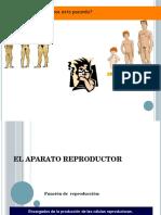 Anatomia de Los Aparatos Reproductores