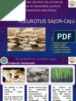 Pleurotus Sajor Caju. Parte 1