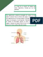 Sistema Respiratorio Material
