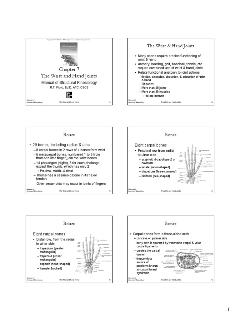 Kinesiology of the wrist and hand joints | Thumb | Finger