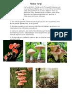 Albun Reino Fungi, Morera, Plantae Ect