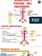 vascular abdomen