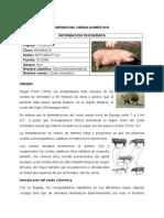 Orígen Del Cerdo