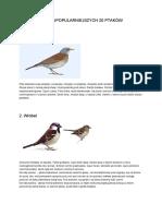 ptaki_klucz