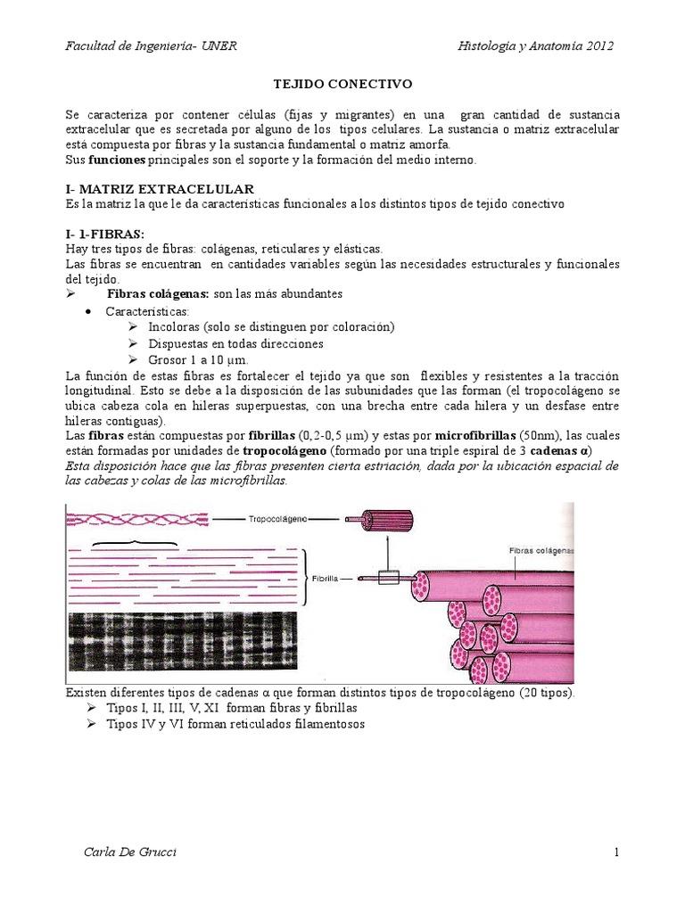 Hermosa Matriz Definición Anatomía Composición - Imágenes de ...