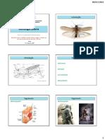 Aula 03 Entomologia